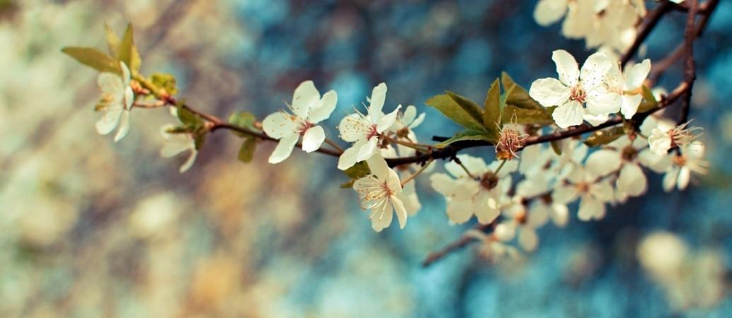 Vintage Flower Wallpaper Tumblr 24511 25180 Hd Wallpapers 001